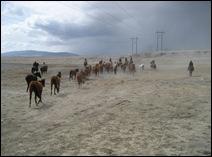 Horse_Drive_08 114
